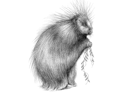 Quilted Critters: The Porcupine