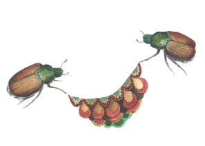 Quilted Helpers: The Beetles
