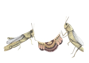 Quilted Helpers: The Grasshoppers